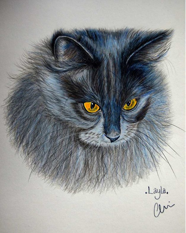 Portrait of a longhaired blue and black cat with yellow eyes