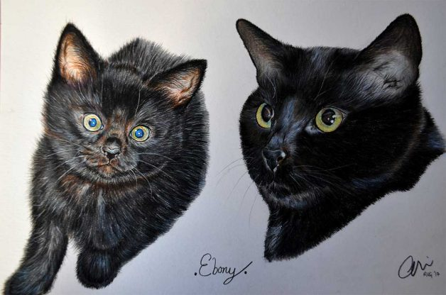 2 very detailed drawings one of a black kitten and one portrait