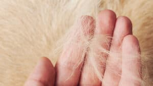 Help my cat is Shedding