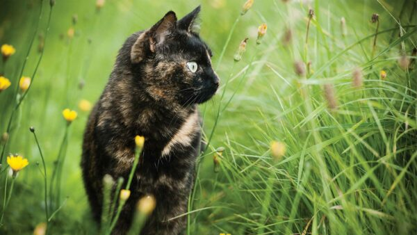 Why bugs are brilliant for cats