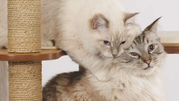 Introducing your kitten to your other pets