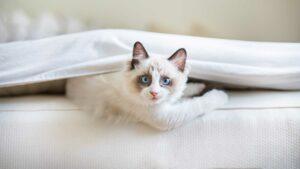 The kitten room