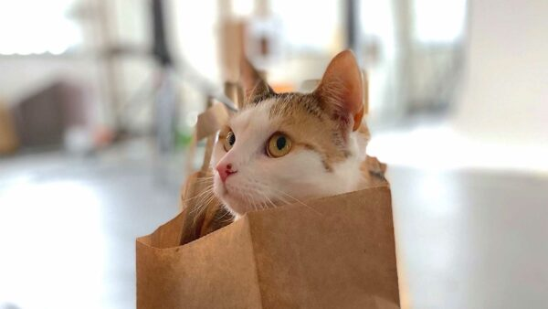You need a cat in your life! Here's why