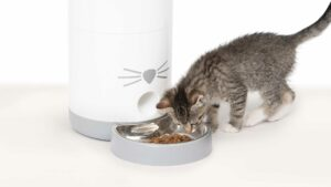 How the Catit PIXI Smart Feeder Changes Your Life