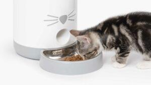Discover the Catit PIXI Smart Feeder