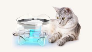 How our Smart Fountain's UVC tech benefits your cat's health