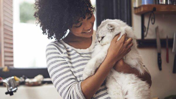 Adopting an adult cat