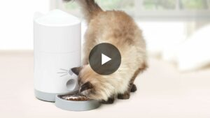 Catit PIXI Smart Feeder Video